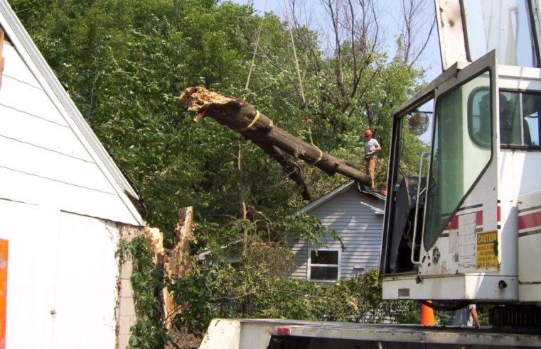 Choosing The Tree Service Company With Caution